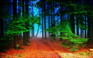 Forest Undergrowth & Path wallpapers and stock photos