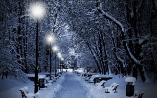 Random: Winter Trees Lamps & Way