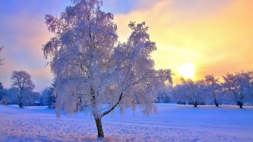 Winter Trees Snow & Sun wallpapers and stock photos