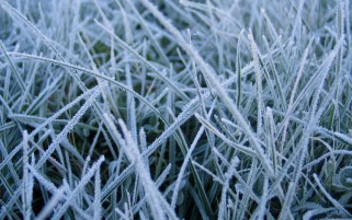 Next: Frost on Grass