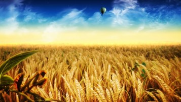 Random: Dreamy Wheat Field Sky Balloon