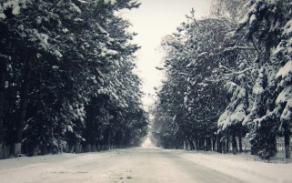 Random: Winter Avenue Forest & Road