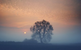 Random: Foggy Sunset Tree & Field