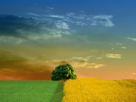 Sky Tree Fields Green & Yellow wallpapers and stock photos