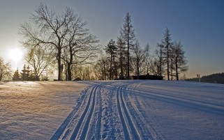 Snow Trails Sun Trees Winter wallpapers and stock photos