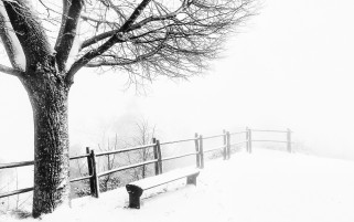 Foggy Cold Weather wallpapers and stock photos