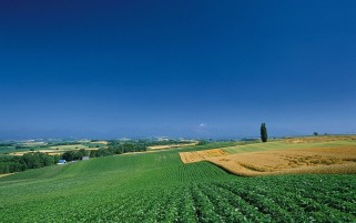 Leaning Farm Land & Sky wallpapers and stock photos