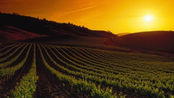 California Napa Valley Sunset wallpapers and stock photos