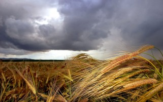 Crops & Clouds Scenery wallpapers and stock photos