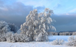 Snow Trees & Bushes Winter wallpapers and stock photos