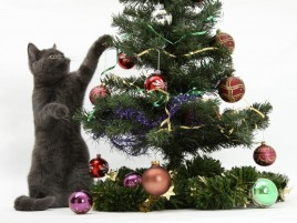 Cat Christmas Tree wallpapers and stock photos