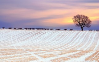 Next: Winter Field & Trees Dawn