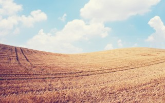 Sky Clouds & Wheat Field wallpapers and stock photos