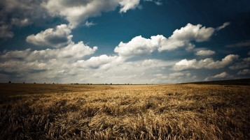 Clouds Sky & Corn Field wallpapers and stock photos