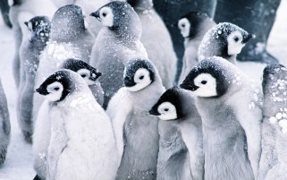 Frozen Penguins wallpapers and stock photos