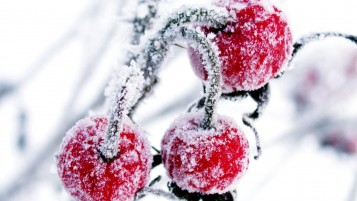 Frosted Cranberry wallpapers and stock photos
