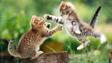 Kitty Fight wallpapers and stock photos