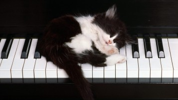 Piano Kitten wallpapers and stock photos