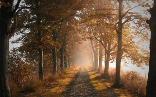Random: Autumn Forest Road & Fog