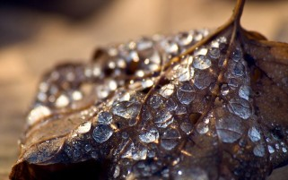 Waterdrops on Leaf wallpapers and stock photos