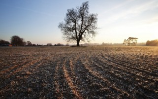 Autumn Trees Field Hoar Frost wallpapers and stock photos
