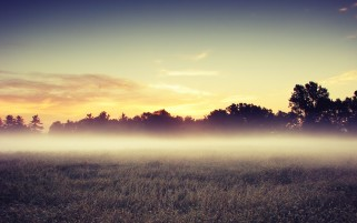 Sunset Trees Field & Mist wallpapers and stock photos
