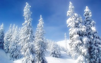 Bright Winter Trees & Snow wallpapers and stock photos