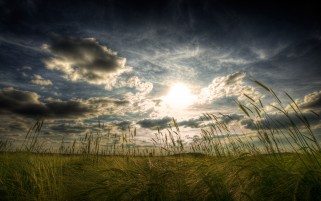 Dark Clouds Sun & Wheat Field wallpapers and stock photos