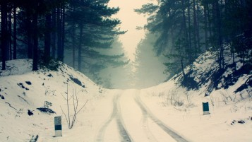 Random: Forest Snow Road & Fog