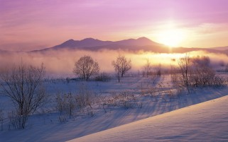Previous: Purple Sky Fog Sun Trees Snowy