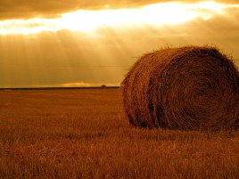 Hay Bale Field & Sunny Sky wallpapers and stock photos