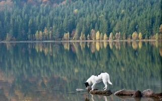 Dog Lake Forest & Stones wallpapers and stock photos