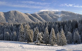 Next: Winter Trees & Snow Scenery