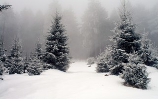 Snow Trees & Foggy wallpapers and stock photos