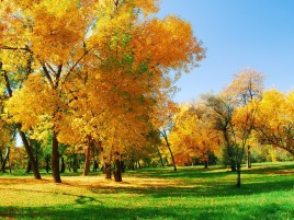 Autumn Trees Leaves & Grass wallpapers and stock photos