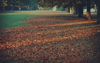 Autumn Leaves Close Up View wallpapers and stock photos
