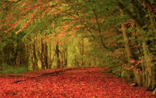 Autumn Leaves Red Carpet wallpapers and stock photos