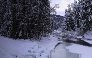 Winter Trees Snow & Creek wallpapers and stock photos