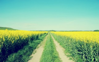 Random: Rape Fields & Path