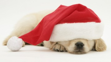 Santa Puppy wallpapers and stock photos