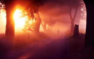 Sunset Trees Road Bicycle Mist wallpapers and stock photos