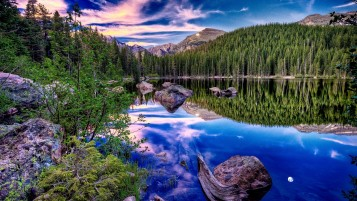 Forest Lake Pflanzen & Steine wallpapers and stock photos