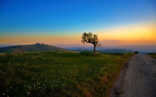 Sunset Tree Fields Grass & Way wallpapers and stock photos