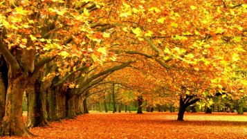 Autumn Park Trees & Leaves wallpapers and stock photos