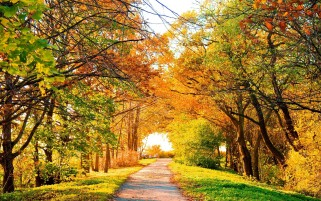 Beautiful Autumn Trees & Path wallpapers and stock photos