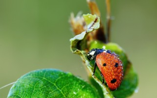 Ladybug wallpapers and stock photos