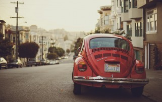 Red Beetle wallpapers and stock photos