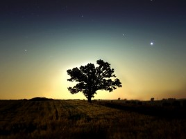 Random: Sunset Night Stars Tree Field