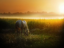 Apus de soare Meadow & White Horse wallpapers and stock photos