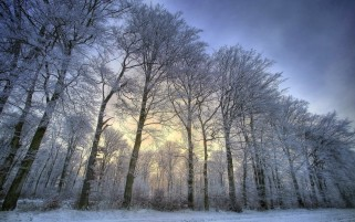 Awesome Snow Trees wallpapers and stock photos